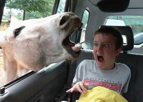 caballo safari