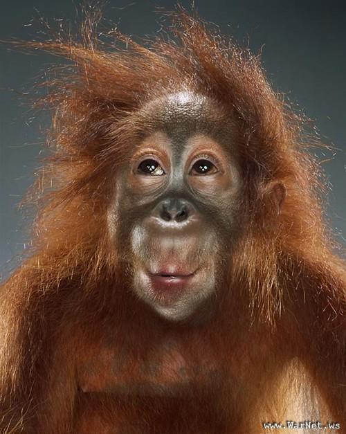 monos inteligentes