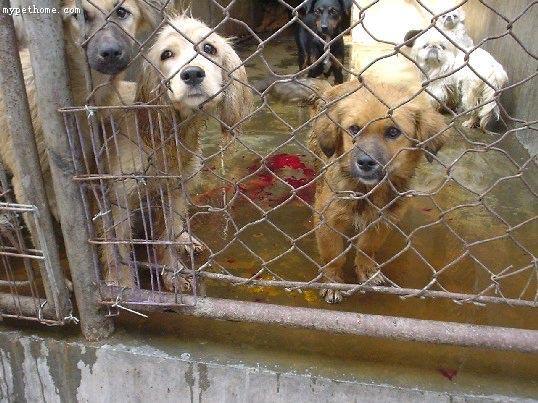 perros en china 5