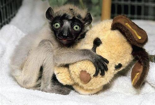 mono peluche